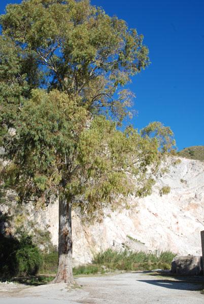 Baum vor dem Steinbruch am Rio Chillar