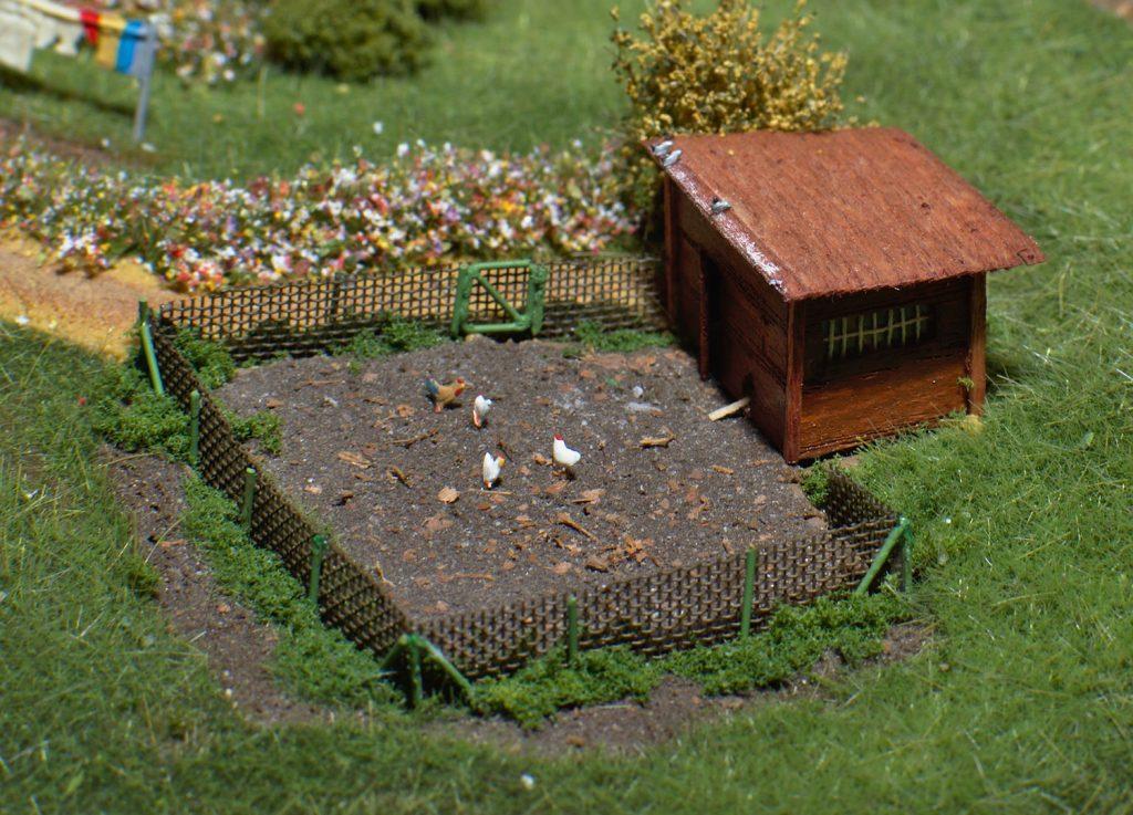 Hühnerstall mit Tauben (Foto: KW)